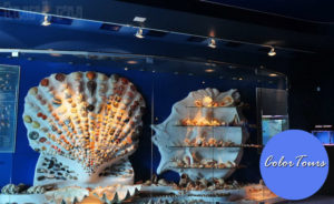 muzej-okeana