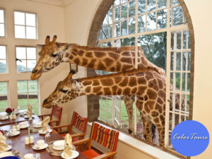 giraffe-manor-in-kenya-6