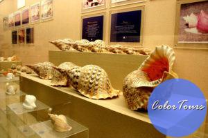 Phuket-Seashell-Museum-2