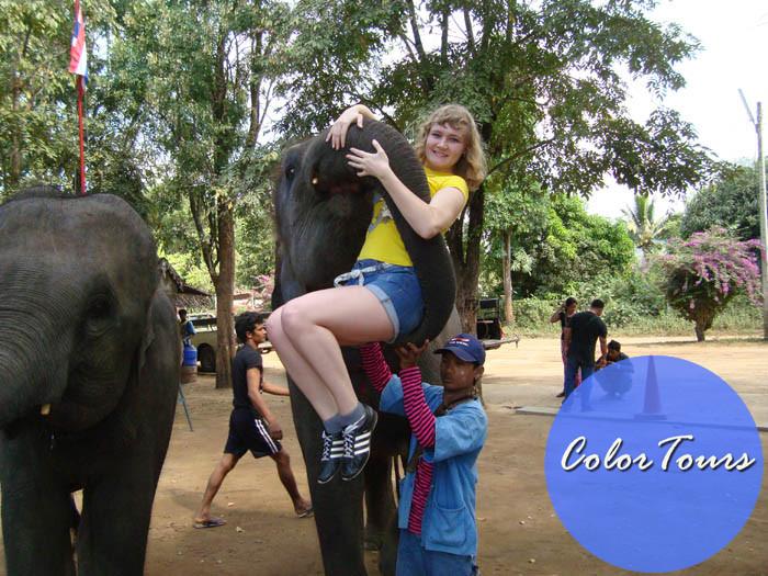 Слоновья деревня в Паттайе
