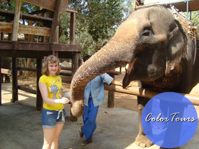 Покормить слона в Паттайе