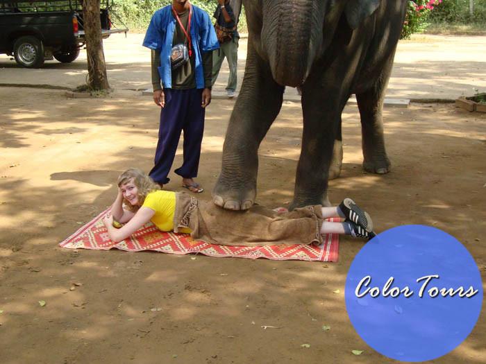 Массаж от слона в Паттайе