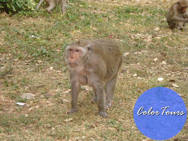 кормление обезьян Таиланд