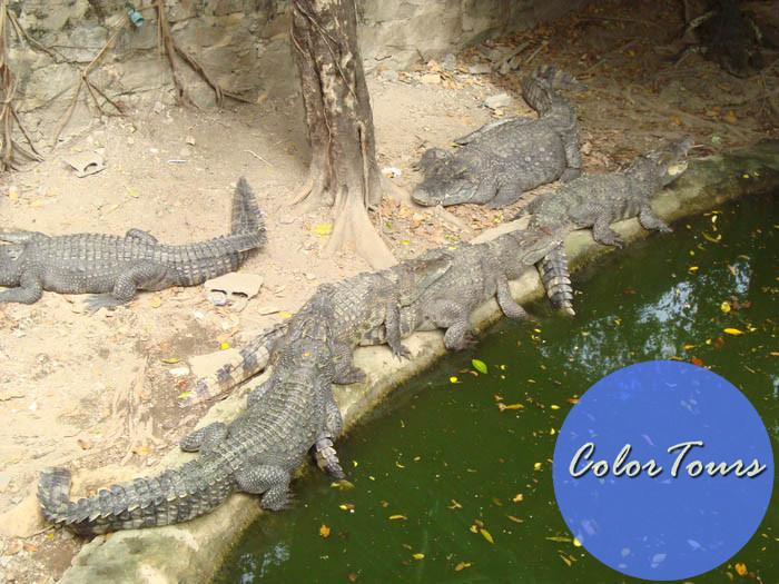 Siracha Tiger Zoo