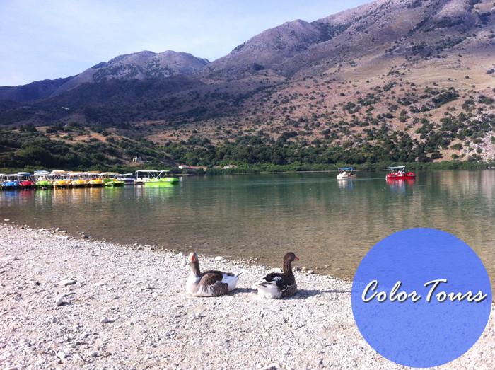 Гуси на озере Курнас