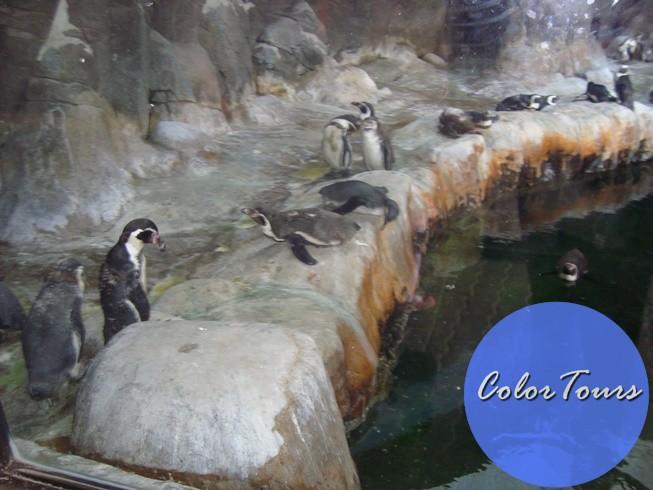 Прогулка по Московскому зоопарку