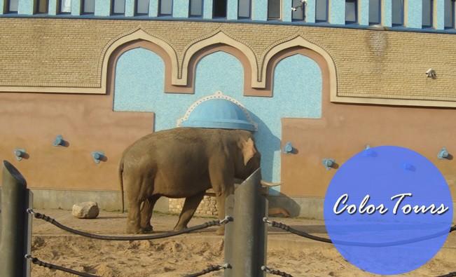 Кого можно увидеть в Московском зоопарке