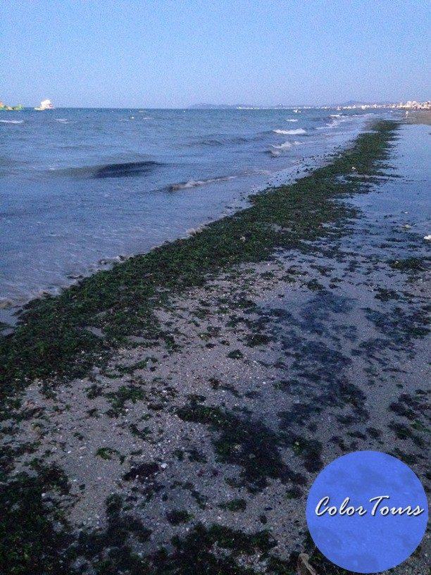 Водоросли на пляжах Римини