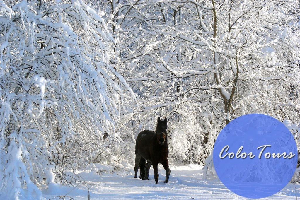 конные прогулки по Адыгее