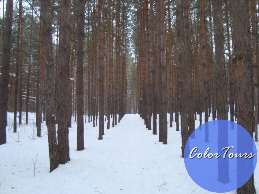 Бузулукский бор зимой