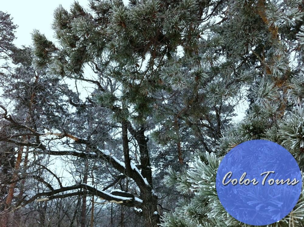Отдых зимой в Бузулукском Бору