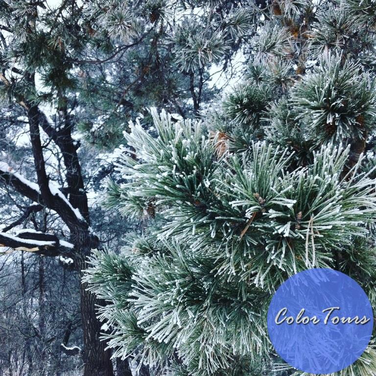 Зима в Бузулукском бору
