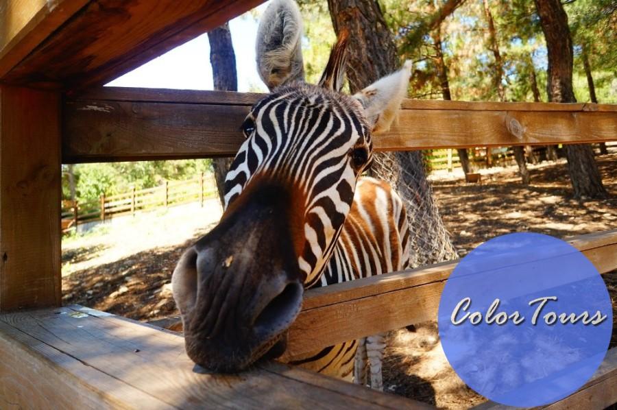 Зоопарк в окрестностях Геленджика