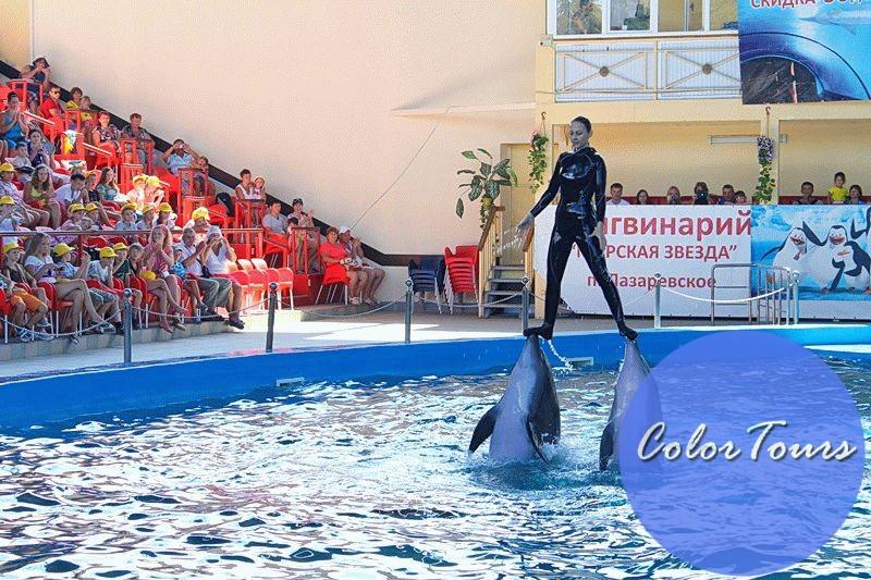 Дельфинарий Лзаревское