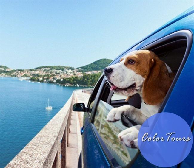 Как путешествовать с домашними животными на машине
