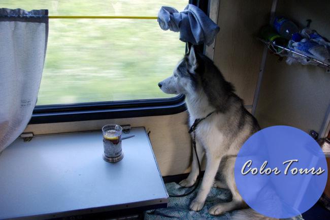 Как путешествовать с домашними животными на поезде