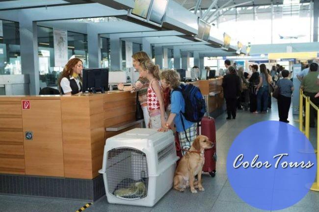 Как путешествовать с домашними животными на самолёте